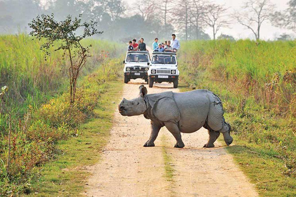 One Horned Rhinoceros seen on our Kaziranga Safari Experience