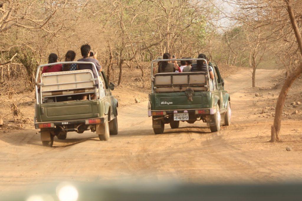 Jeep Safari of Gir National Park