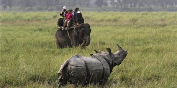 One horned rhinoceros spotted in Kaziranga