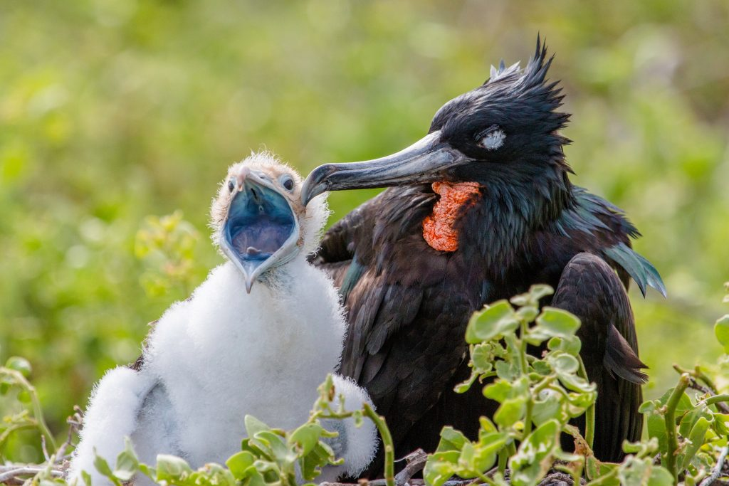 Endemic Birdlife of the Galapagos Island