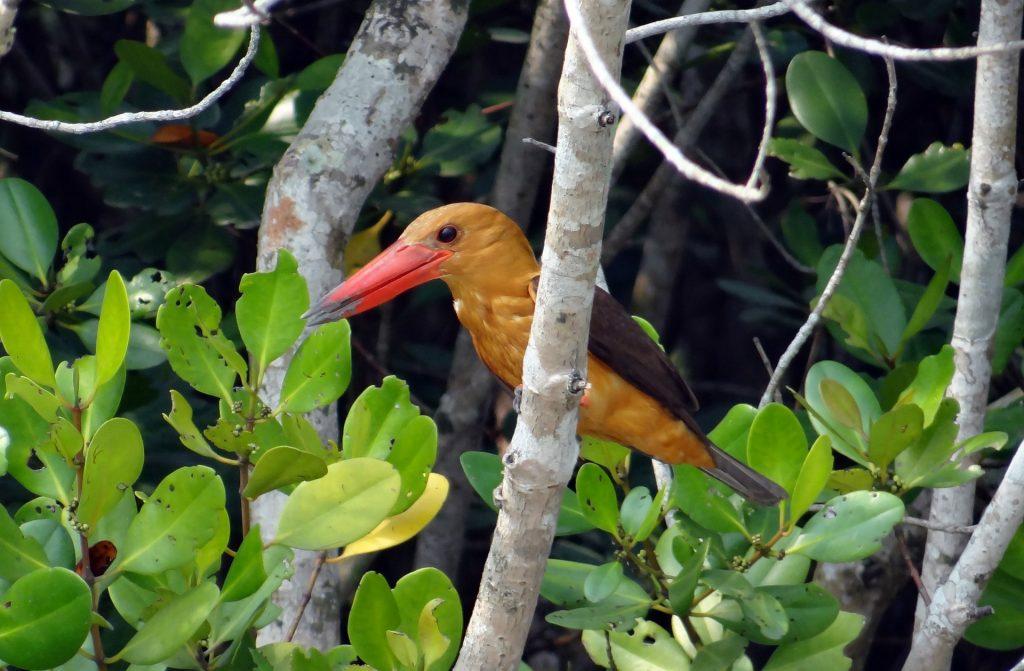 Birdlife of Sunderbans