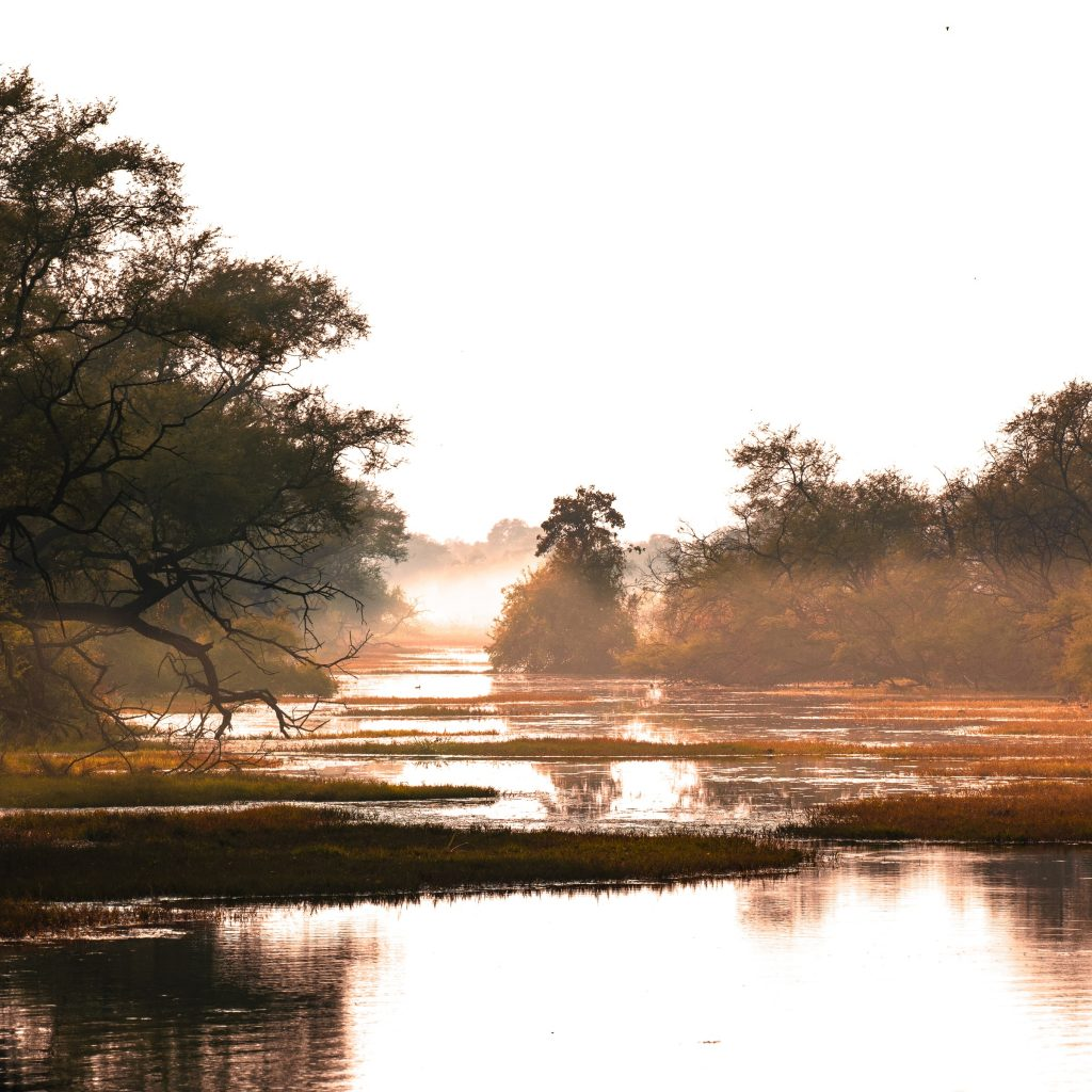 Wetlands of Bharatpur