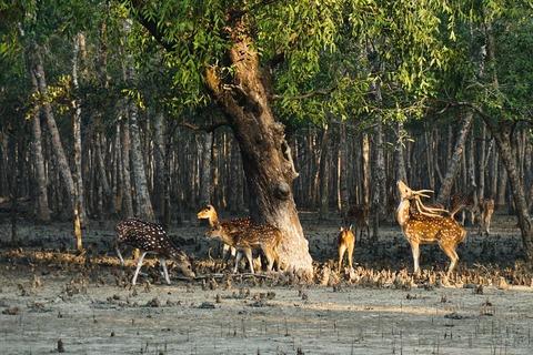 Sunderbans Wildlife Tours