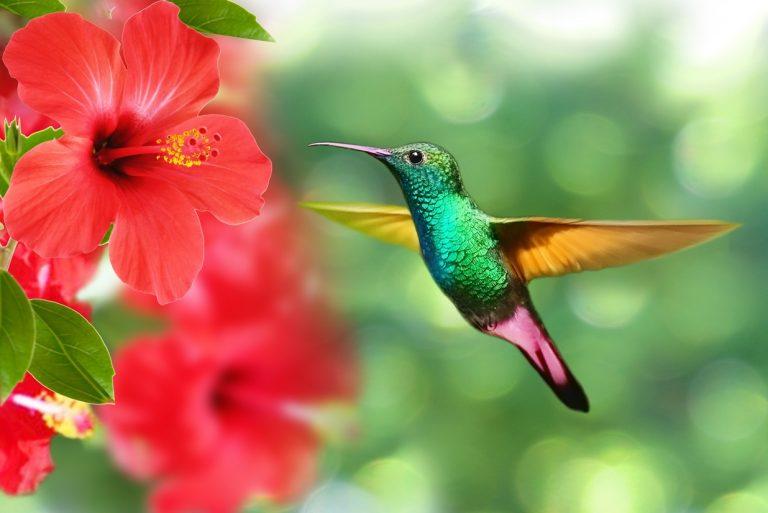 Ecuador Birding Trips