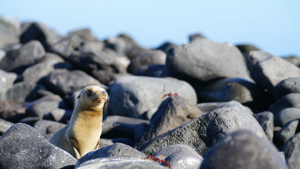 Seals observed on our Galapagos Trip