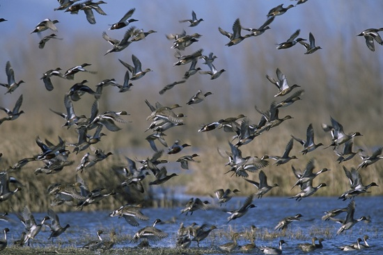 Mangalajodi Birding Tours