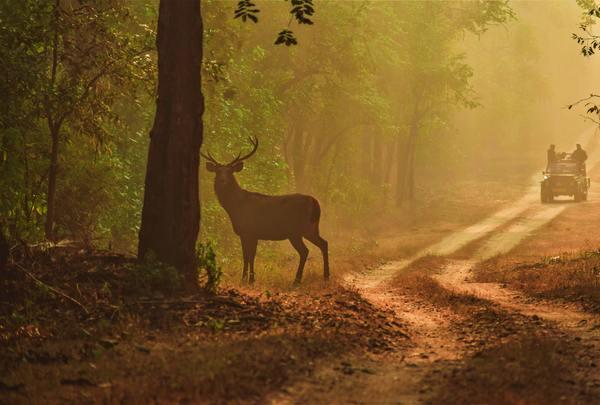 Kanha Wildlife Holidays