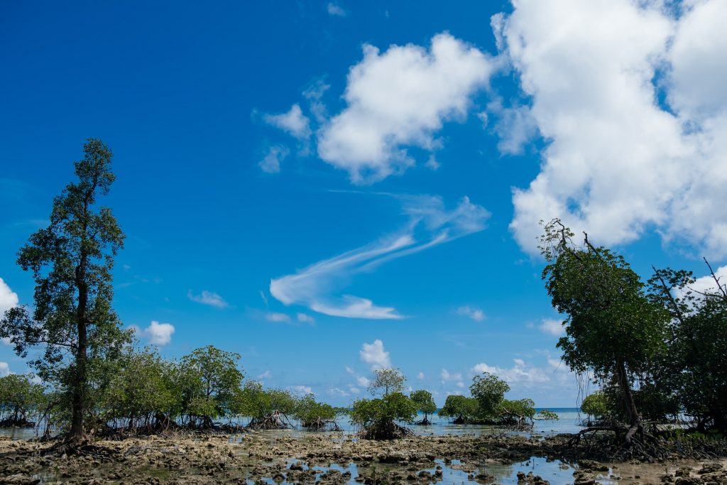 Coastal Mangroves explored on our Andaman Experience
