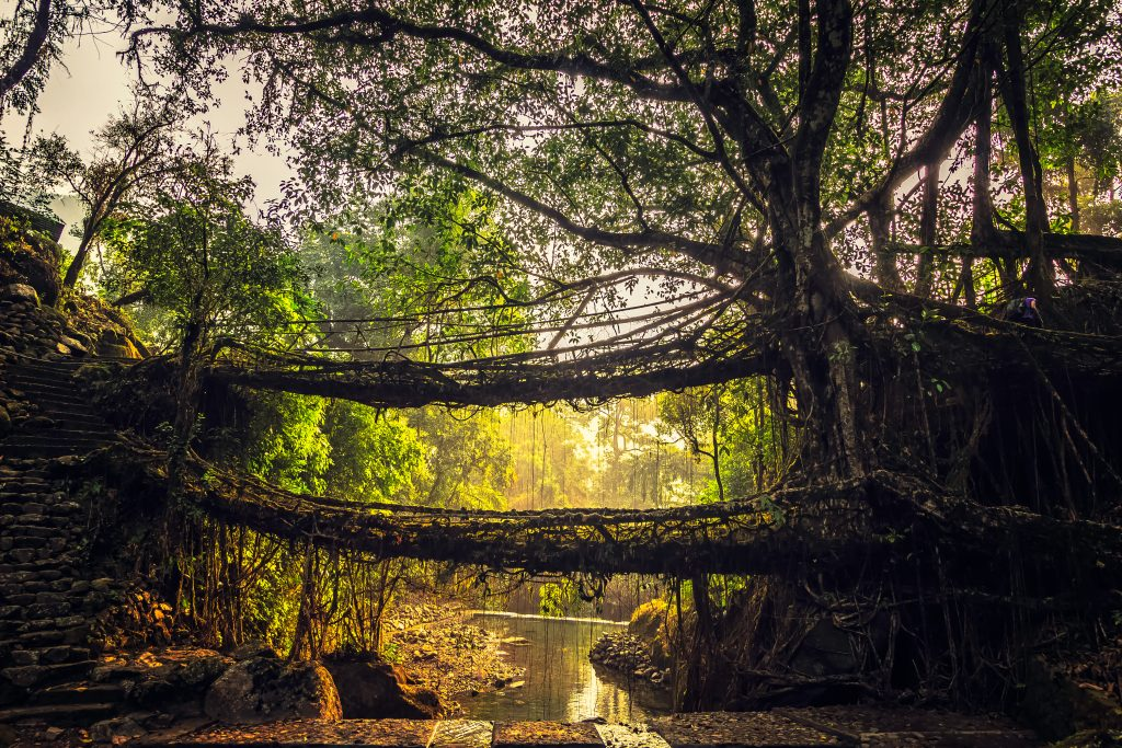 Trekking to Double Decker Root Bridges on our Meghalaya Trip
