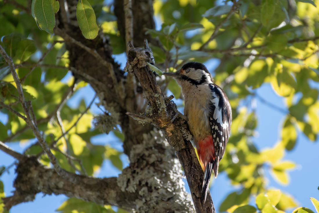 Himalayan Birding in Pangot