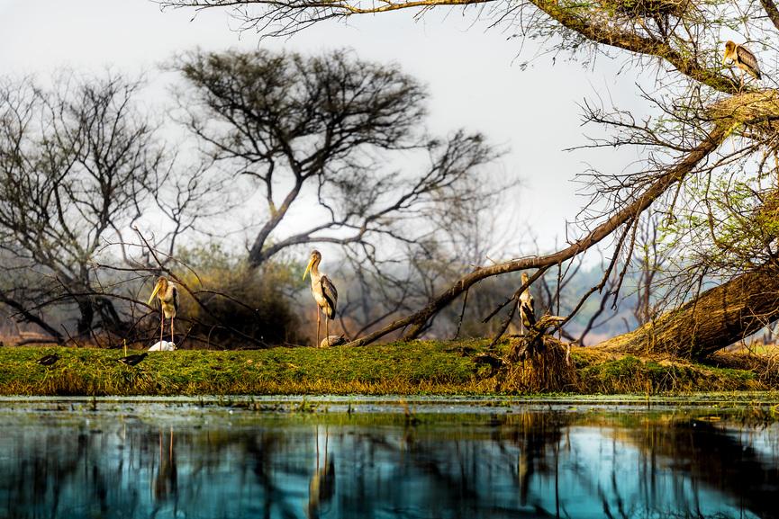 Wetland wonders of Bharatpur