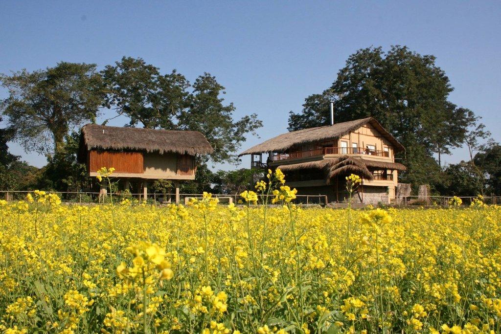 Diphlu River Lodge 1