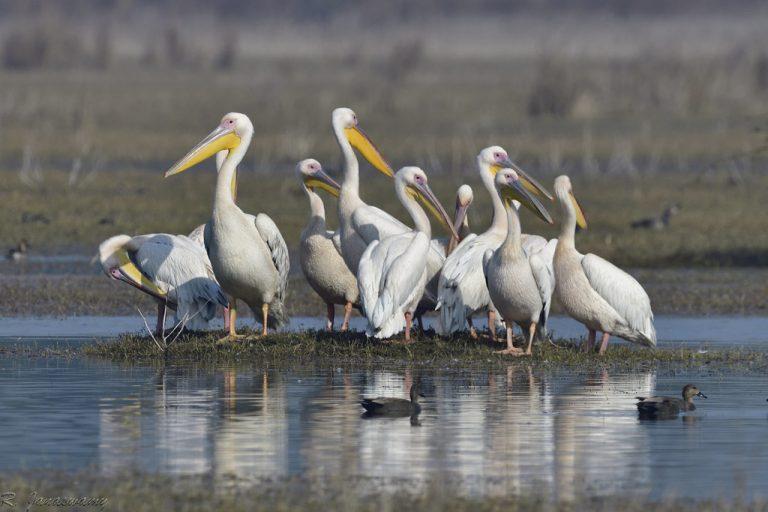 birdwatching in bharatpur