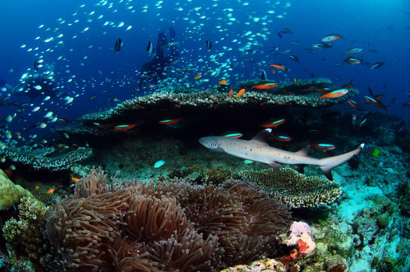 Maldives Travel Guide - Responsible Travel