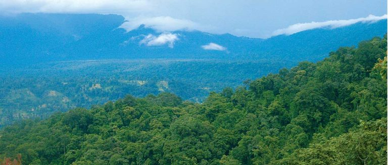 Dense forests of Namdapha for as far as the eye can see