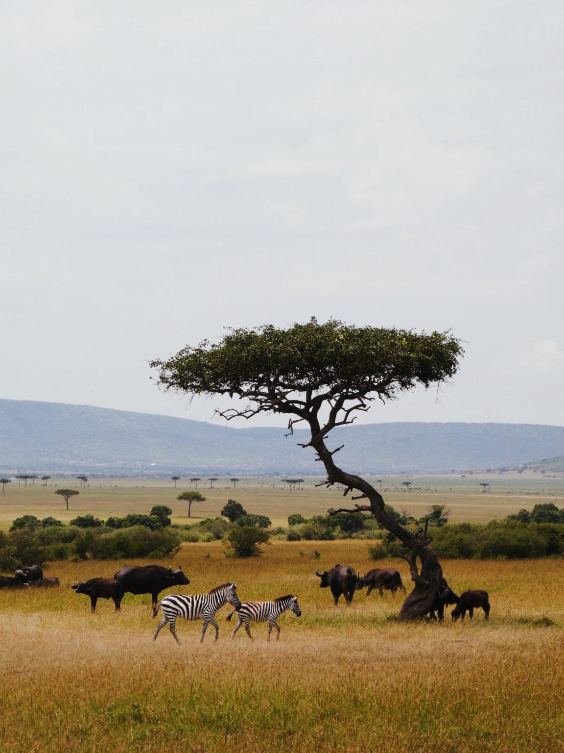 Sense of Scale - Wildlife Photography Tips